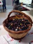 La raccolta delle olive - cl.2^B sc. Primaria Socciarelli